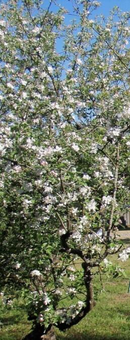 gîte rural Le Darot, printemps